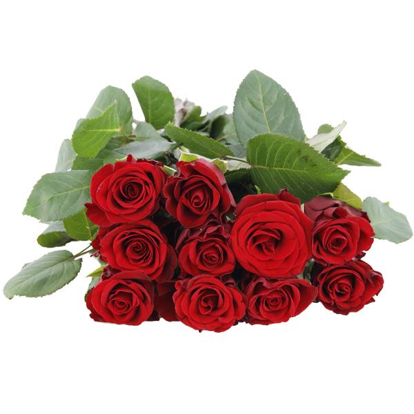 haus rote rose nuvaring erinnerung