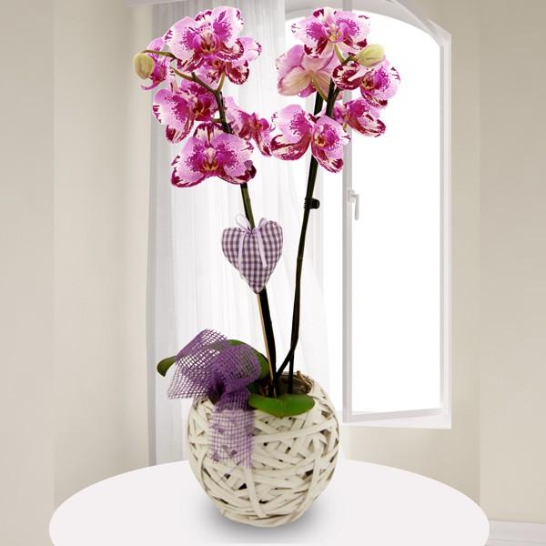 rosa pink marmorierte orchidee phalaenopsis mit rebkorb alle zimmerpflanzen nach sorte. Black Bedroom Furniture Sets. Home Design Ideas