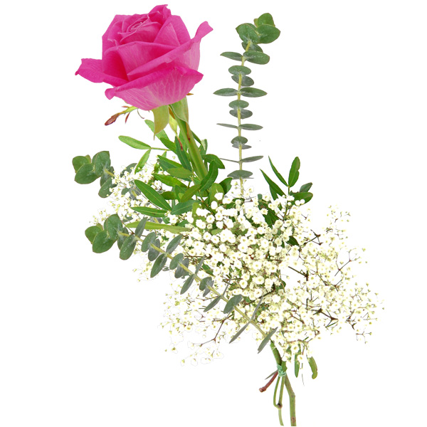 Einzelne pinkfarbene Rose