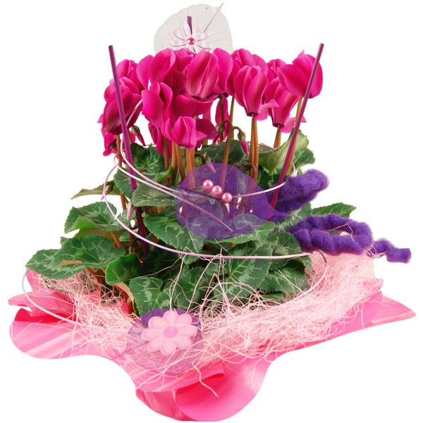 Sträuße Geschenktopf Alpenveilchen pink