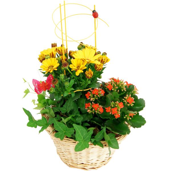 Blumenschmuck Pflanzgesteck Sommerkorb