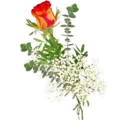 Gelb-rote Rose