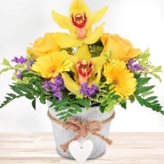 Orchideengruß Gelb-Lila