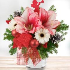 Weihnachts- amaryllis