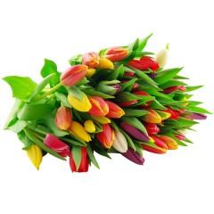 10 bunte Tulpen im Bund