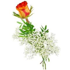Einzelne gelb-rote Rose