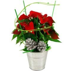 Geschenktopf Roter Weihnachtsstern (Höhe: ca. 35 cm)