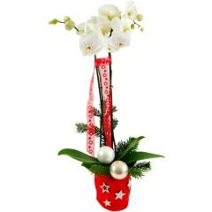 Weihnachten Phalaenopsis Weiß