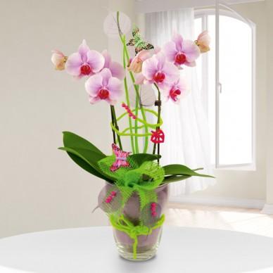 Exklusives Orchideengesteck (Phalaenopsis) in Rosa im Glas