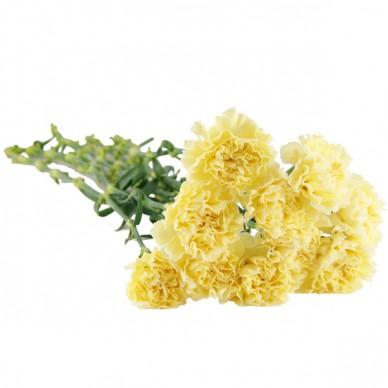 10, 15 oder 20 weiß-gelbe Nelken im Bund