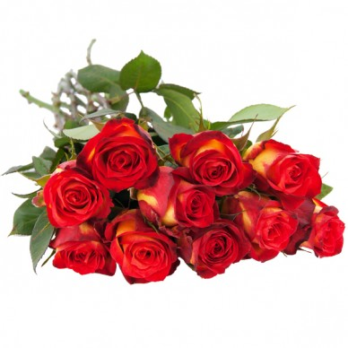 10 15 oder 20 gelb rote rosen im bund alle preiskategorien nach preis schnittblumen. Black Bedroom Furniture Sets. Home Design Ideas