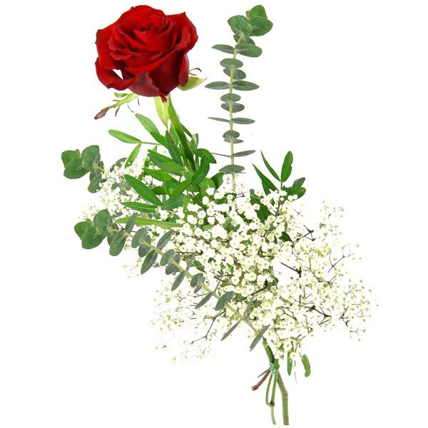 einzelne rote rose einzelne rosen nach sorte. Black Bedroom Furniture Sets. Home Design Ideas