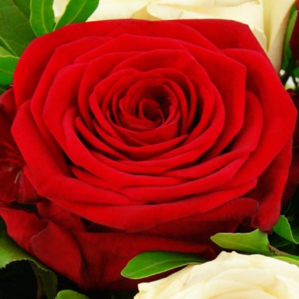 blumenstrau rosenromanze ab 20 00 nach preis blumenstr u e blumenversand. Black Bedroom Furniture Sets. Home Design Ideas