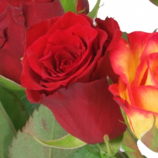 15 rot orange rosen mit milka pralinen hugo nach sorte schnittblumen blumenversand. Black Bedroom Furniture Sets. Home Design Ideas