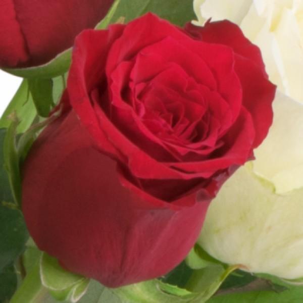 15 rot wei e rosen mit milka pralinen hugo nach preis schnittblumen blumenversand. Black Bedroom Furniture Sets. Home Design Ideas