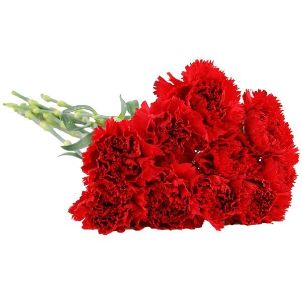 10 15 oder 20 rote nelken im bund nach preis schnittblumen blumenversand. Black Bedroom Furniture Sets. Home Design Ideas