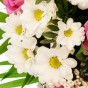 Weiße Chrysantheme
