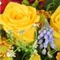 Rose, Trauben- hyazinthe