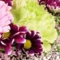 Hellgrüne Nelke, Chrysantheme