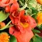 Orangerote Alstromerie