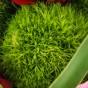 Grüne Bartnelke
