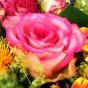 Weiß-pinkfarbene Rose