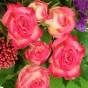 Verzweigte Rose