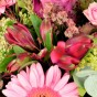Pinkfarbene Alstromerie