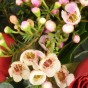 Weißes Waxflower