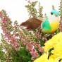 Rosa Calluna und Vogel