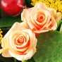 Lachsfarbene Rosen