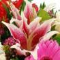 Rosa-weiße Lilienblüte