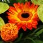 Gelb-orange Gerbera