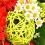 Hellgrüne Rebkugel und Matricaria Kamille