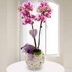 Rosa-Pink marmorierte Orchidee (Phalaenopsis) mit Rebkorb